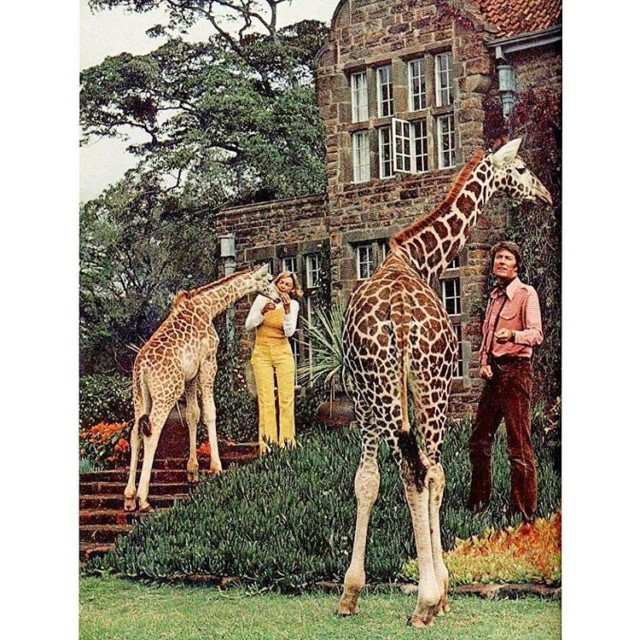 Giraffe Manor in the 1970s throwbackthursday throwback tbt 1970s retrohellip
