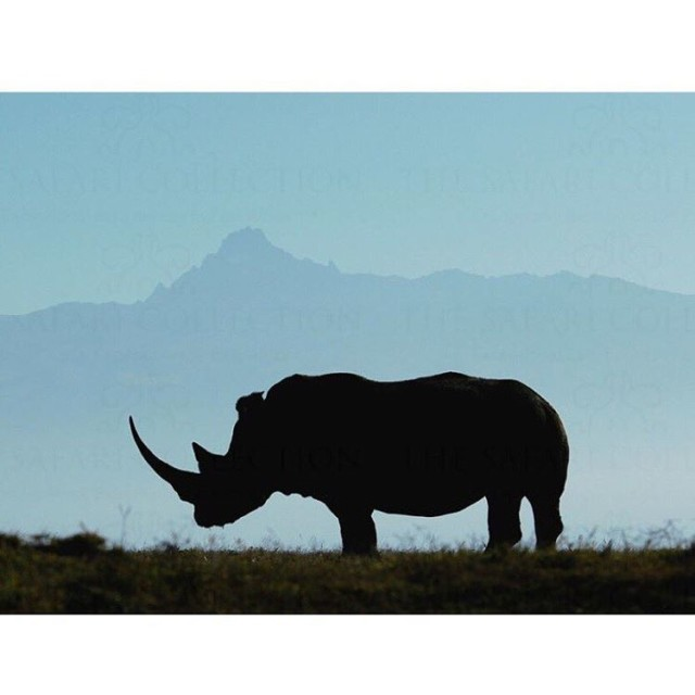 What an incredible shot from SolioLodge! A rhino silhouette amphellip