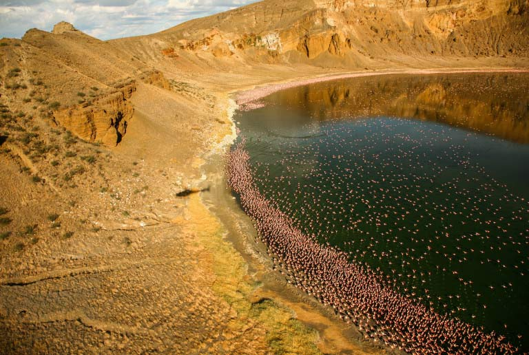 Flamingos (Photo credit- Lorna Buchanan-Jardine)