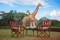 The-Safari-Collection-Afternoon-tea-at-Giraffe-Manor-with-Giraffe