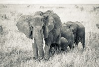 The-Safari-Collection-Herd-of-Elephant-at-Sala's-Camp