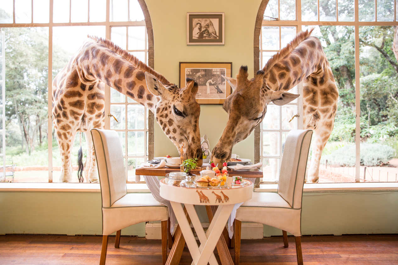 Image result for hotel with giraffes