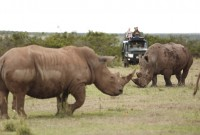 The Safari Collection game drive at Solio Lodge
