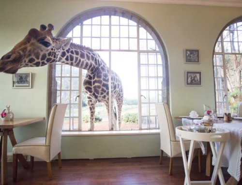 GIRAFFE MANOR IN NEW BBC SERIES
