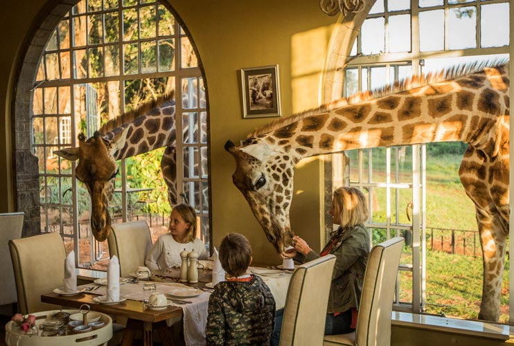 Image result for giraffe hotel