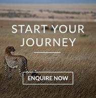 Cheetah hunting on the Masai Mara