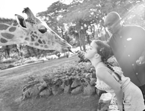 HOW TO KISS A GIRAFFE