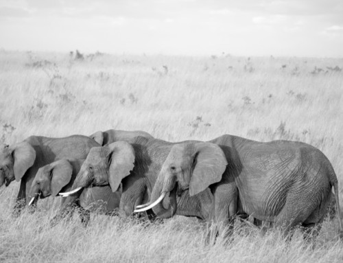 TUSKS, TRUMPETING & TWINS