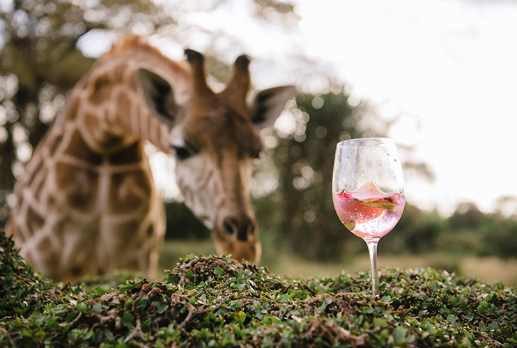GIN AND GIRAFFES