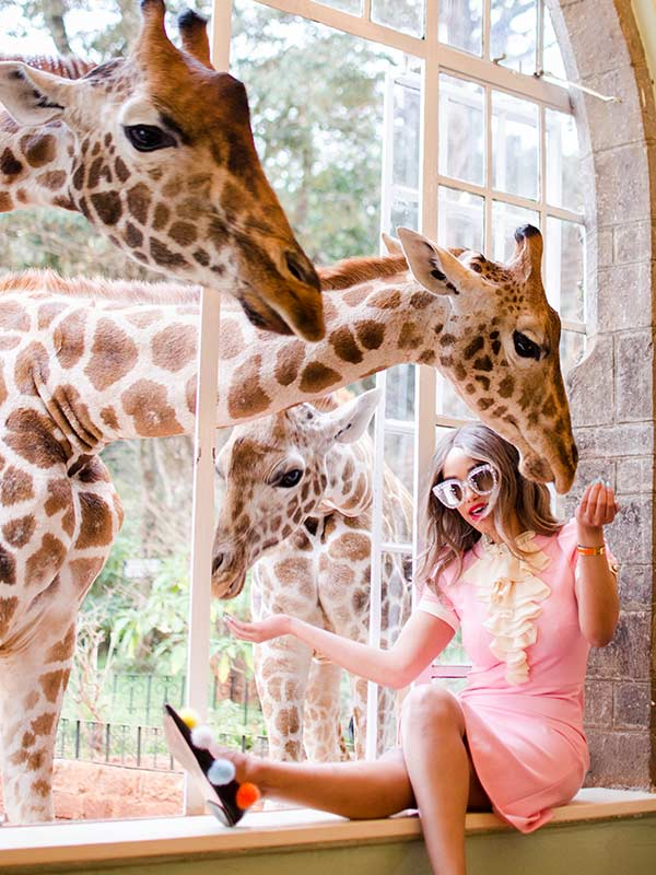 Artisan Wildlife Jigsaw Puzzle South Africa Cape Giraffe